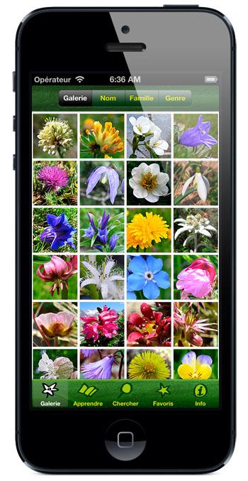 image fleurs des alpes
