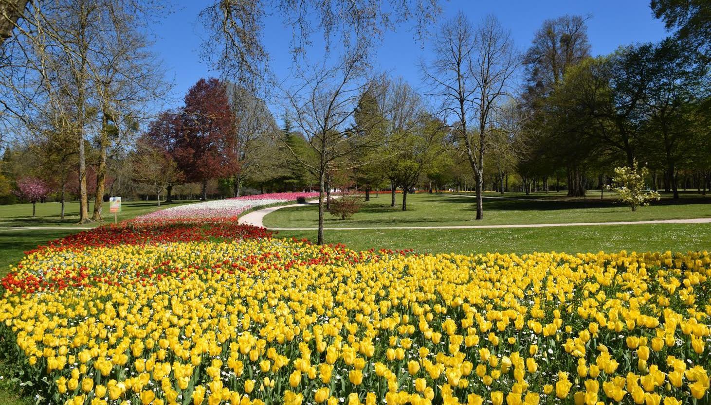 ruban de tulipes chateau de cheverny