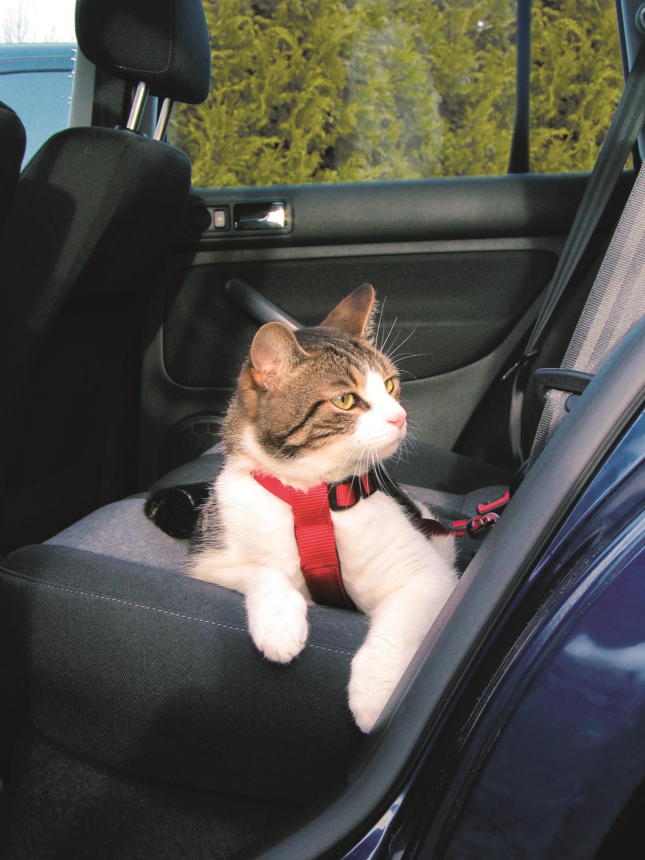 harnais de securite pour animaux animal & co